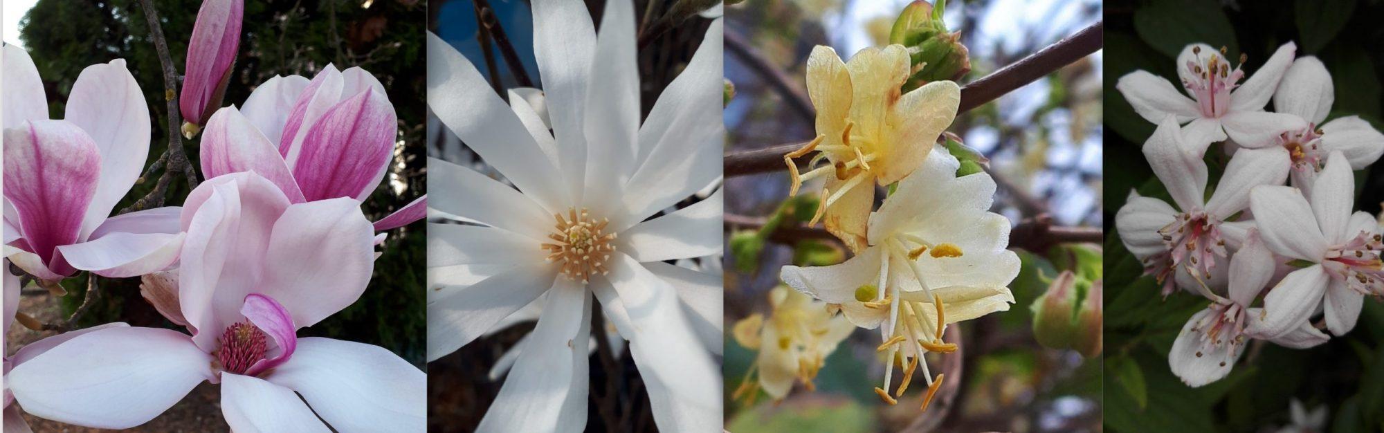ARZENIAS Pflanzen